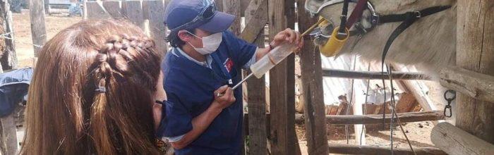 Carrera de Medicina Veterinaria realiza tratamientos odontológicos a equinos en Catapilco