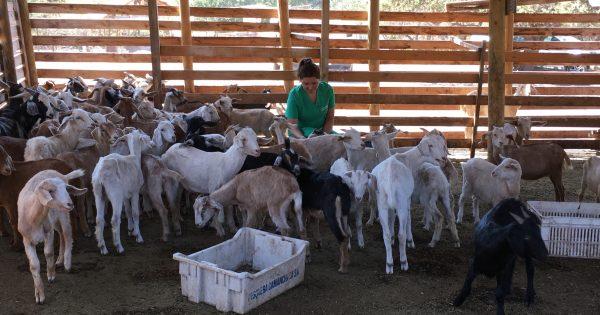 Escuela de Ciencias Agrícolas y Veterinarias visita planta de quesos en La Cruz