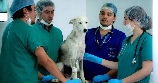 ¡Hospital Clínico Veterinario UVM abre sus puertas!