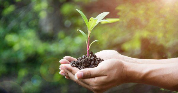 Carreras relacionadas con el medio ambiente y la naturaleza