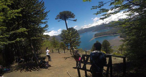 Estudiantes de Medio Ambiente realizan salida a terreno en la Araucanía
