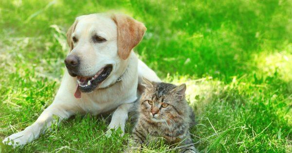 No a las pulgas y garrapatas en tu mascota