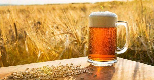 Mercado de la cerveza artesanal: Una oportunidad para emprender