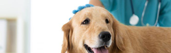 Importancia de contar con una clínica veterinaria universitaria propia