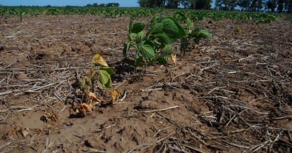 Columna de Opinión sobre el Día Mundial de la lucha contra la sequía